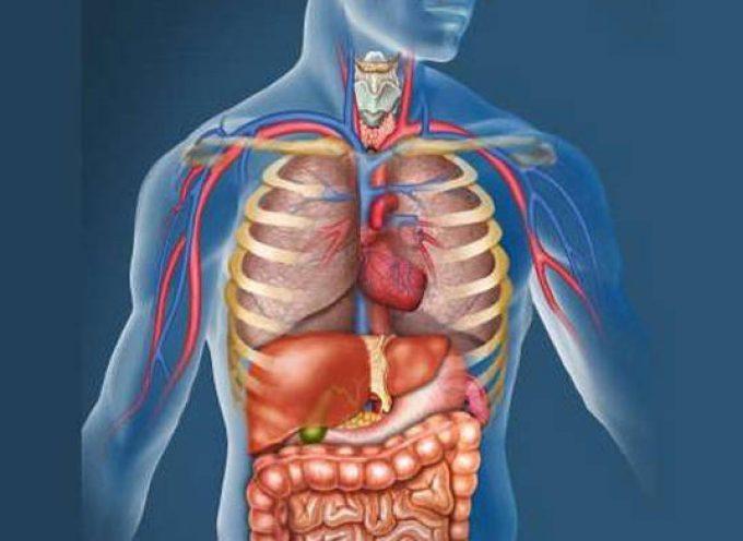 Έλληνας ο γιατρός που βρίσκεται πίσω από την ανακάλυψη του νέου οργάνου στο ανθρώπινο σώμα