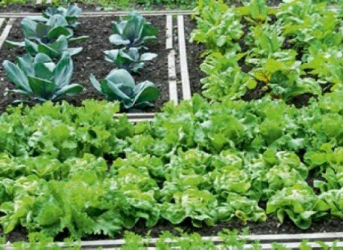 Ξεκίνησαν οι αιτήσεις για τη λειτουργία το δημοτικού λαχανόκηπου