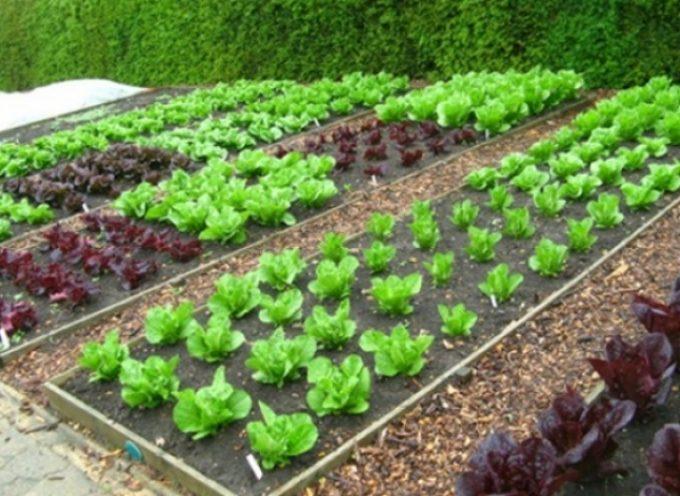 Αρχίζουν οι αιτήσεις για το Δημοτικό Λαχανόκηπο Τρίπολης