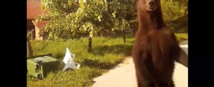 Αρκούδα πρόσωπο με πρόσωπο με οδηγό στο χωριό Αετός στη Φλώρινα! (video)