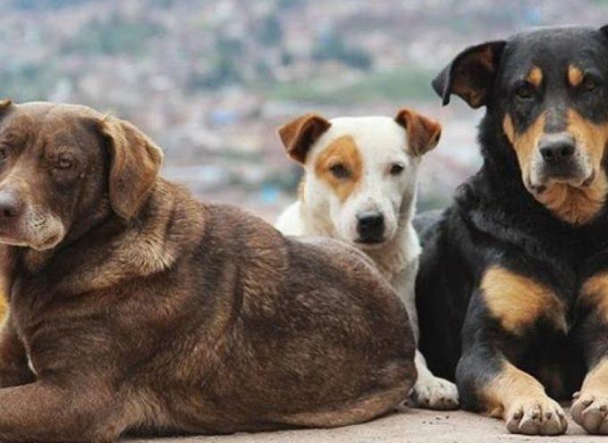 Ο Δήμος Τρίπολης καταδικάζει της αποτρόπαιες πρακτικές εις βάρος των αδέσποτων ζώων