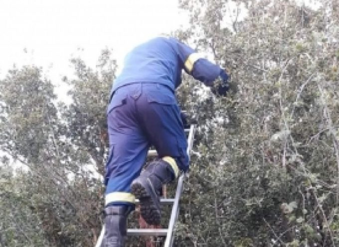 Στο χωριό Βλαχοκερασια έδεσαν σε τσουβάλι 4 νεογέννητα κουταβάκια και τα πέταξαν σε δέντρο (pics)