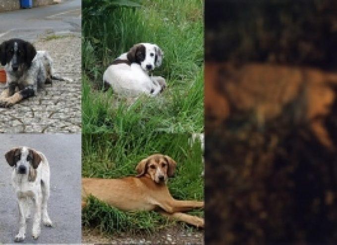 Σκότωσαν με φόλες αδέσποτα σκυλάκια σε Δ.Ε. του Δήμου Τρίπολης (ΠΡΟΣΟΧΗ ΣΚΛΗΡΕΣ ΕΙΚΟΝΕΣ)