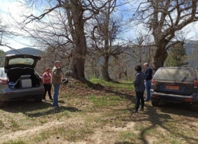 Ενέργειες Δήμου Βόρειας Κυνουρίας για την αντιμετώπιση της Σφήκας της καστανιάς (pics)