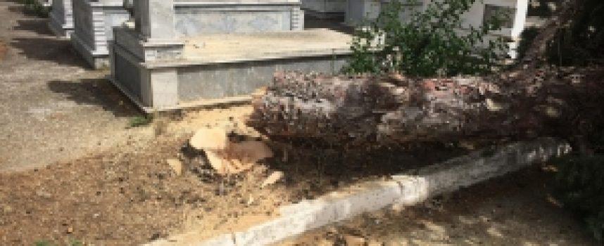 Συνεχίζετε η απομάκρυνση μεγάλων δέντρων στο Κοιμητήριο της Αγίας Τριάδας (video – pics)