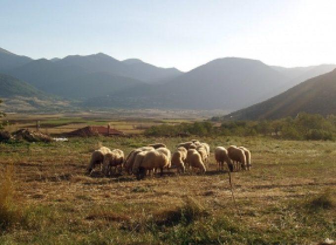 Μόνο κατεπείγοντα θέματα θα εξυπηρετούν την επόμενη εβδομάδα οι Διευθύνσεις Αγροτικής Οικονομίας και Κτηνιατρικής στην Τρίπολη