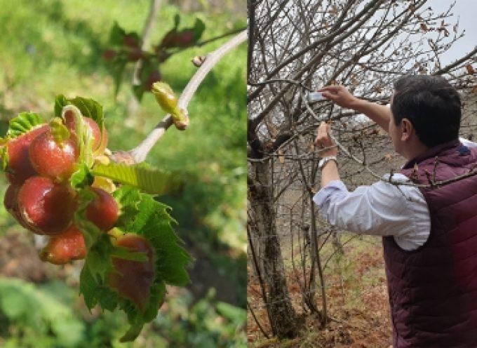 Υιοθετήθηκε η πρόταση του Δήμου Βόρειας Κυνουρίας από την Περιφέρεια Πελοποννήσου για την παρακολούθηση των πληθυσμών των εντόμω…