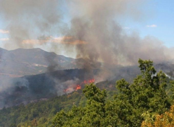Πυρκαγιά στην περιοχή Κυπαρίσσια του δήμου Μεγαλόπολης